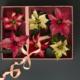 Kuvassa on laatikossa valkoisia, punaisia ja puna-valkoisia joulutähtiä. Laatikon päällä on vaaleanpunainen silkkinauha. Kuvan tausta on tumman harmaa.